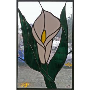 Raamhanger witte kelkbloem