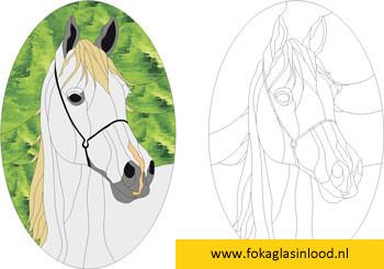 Patroon Arabisch volbloed paard
